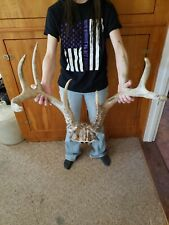 Monster Iowa 9 Point Whitetail Deer Antler Rack Horn Skull Decor Cabin Heavy