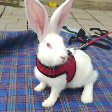Hamster Set Ferret Guinea Pig Rabbit Harness Walk Lead Leash Mini Animal #u7