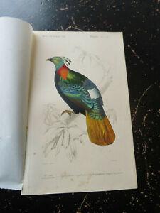 Monal - D' Orbigny D' Histoire Naturelle, published Paris ca:1840