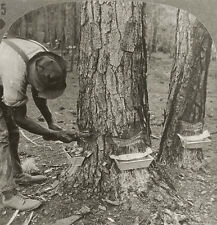 Keystone Stereoview Chipping Pine Trees for TURPENTINE, GA 600/1200 Card Set T3