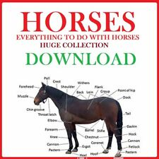 HORSES EQUINE HUGE COLLECTION OF BOOKS DOWNLOAD PDF