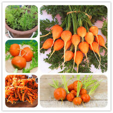 Parisian Carrot Seeds Non-GMO Vegetable Seeds Kitchen Assisted Food Carrot Seeds