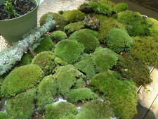 Super Mix Live Moss Assortment for Bonsai Terrariums Fairy Garden Vivarium
