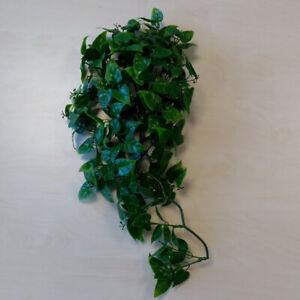 Terrarium Kunstpflanze - Mexican Phyllo M ca. 40cm Hängepflanze, Plastikpflanze
