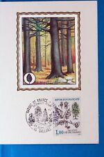 HETRE FAYARD    ARBRE  FRANCE  CPA Carte Postale Maximum  Yt 2384 C