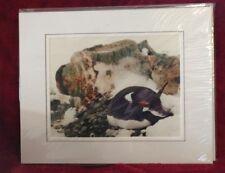 Gentoo Penguin Signed Photo Print Ron Brunsvold Wildlife & Nature Photography