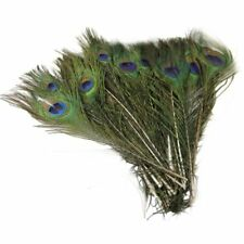 50pcs Beautiful Natural Peacock Tail Feathers About 10-12'' DIY Decoration