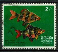 Sri Lanka 1972 SG 597 Usato 100% Pesci