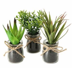 3x Kunstpflanze im Glas klein - Sukkulenten Set Tischdeko Büro Pflanze künstlich