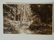 Sheringham in the Woods Old Postcard Judges Picture Postcard