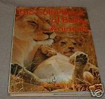 The Color Book of Baby Animals 1977 David Roberts