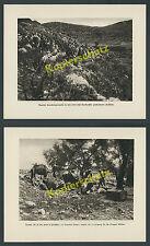 Palästina dt. Kavallerie-Streife Asienkorps Kamele Karawane Nachschub Wüste 1918