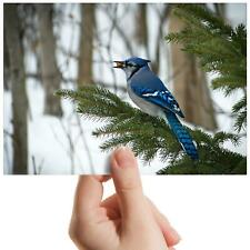 "Bluejay Bird Nature Winter Small Photograph 6"" x 4"" Art Print Photo Gift #16609"