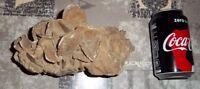 Magnifique Rose des sables du Sahara - 1,429 Kg - Grandes et petites pétales