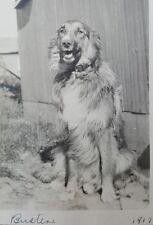 ANTIQUE VINTAGE DOG PORTAIT BUSTER GOLDEN RETRIEVER VERNACULAR PHOTOGRAPHY PHOTO