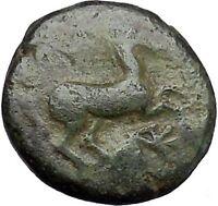Maroneia in Thrace 400BC Original Ancient Greek Coin Horse Vine Grapes  i48967