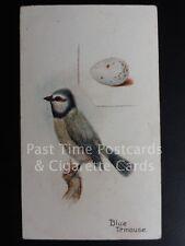 Single: 'Blue Titmouse' - 'BIRDS & EGGS' Harvey & Davy 1905
