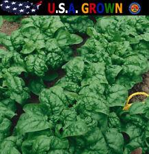 250 Bloomsdale Spinach Longstanding Vegetable Garden Seeds Heirloom Non-Gmo