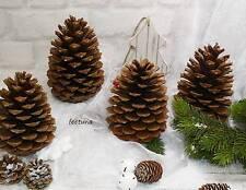 20 große Tannenzapfen Zapfen Pinienzapfen 12 x 14-18 cm und 8 x 10-14 Maritima