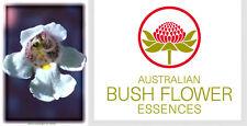 FIORI AUSTRALIANI Alpine Mint Bush ESAURIMENTO-PRESSIONE/Rivitalizzazione Gioia