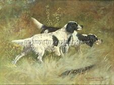 Antique 8X10 Photograph Print Pair Bird Hunting English Setters On Point