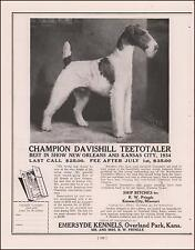 Wire Haired Fox Terrier Champion Davishill Teetotaler, Stud Service Ad 1935