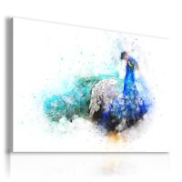 PAINTING DRAWING PEACOCK BIRDS PRINT Canvas Wall Art Picture  R51 MATAGA
