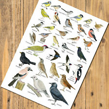 British Garden Birds A5 Identification Card Guide Chart Postcard