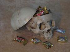 Skull Candy Dish, Halloween Prop Decoration, New