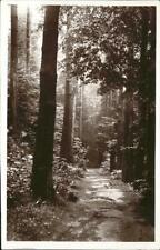11365055 Munster Haut Rhin Elsass Furch Waldpartie Munster