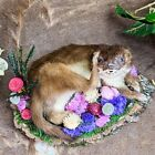 W187 Taxidermy Curiosities Oddities Ermin Weasel collectible display decor
