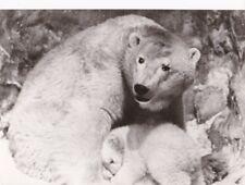 PF Im Reich des weißen Bären