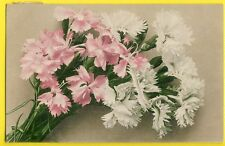 cpa Martin ROMMEL, STUTTGART Fleurs OEILLETS Blumen NELKEN Flowers CARNATIONS