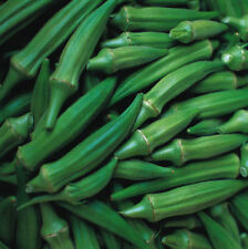 Green Okra Seeds, Vegetable Seed (10 Seeds) - Liveseeds -