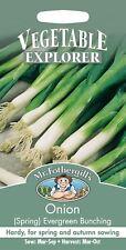 Mr Fothergills - Vegetable - Spring Onion Evergreen Bunching - 350 Seeds