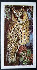 LONG EARED OWL  Superb Vintage Colour Card  ## VGC