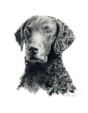 Curly Coated Retriever Dog pencil 8 x 10 Art Print by Artist Dj Rogers w/Coa