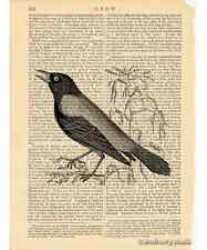 Crow Art Print on Antique Book Page Vintage Illustration Black White Birds