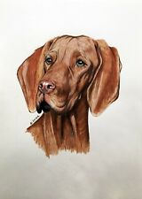 HUNGARIAN POINTER dog animal realism A3 colored pencils on paper by ArtKaska