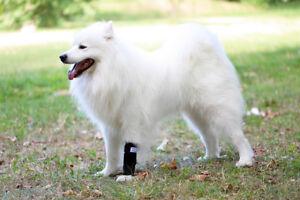 Nature Pet Medium Hunde Handgelenk Bandage / Vorderlauf Bandage für Hunde