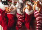 Avanti funny greeting card Christmas cat kitten photo