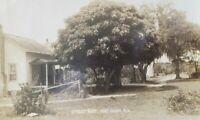 Antique Photograph Street View Fort Ogden Florida Postcard
