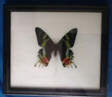 Butterfly Collectables