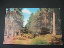 Postcard. A Forest Ride, Forest of Dean. Posted to Stoke-on-Trent, 1977