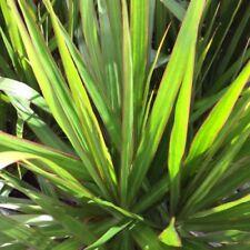 Dracaena Partial Shade House Plants
