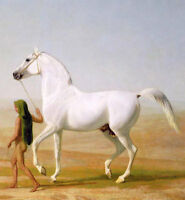 LMOP429 hand naked girl carrying white horse animal art oil painting on canvas