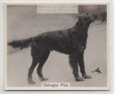 Gordon Setter 1930s Champion Dog Breed Canine Pet Ad Trade Card