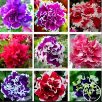 100 PCS Seeds Garden Petunia Petals Bonsai Flowers Garden Plants Free Shipping R