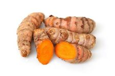 new! 2 oz FRESH Turmeric Roots TO EAT or GROW Curcuma Indian Saffron Spice Root