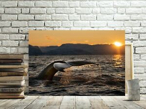 BEAUTIFUL WHALE TAIL CANVAS PICTURE #3 SURFACING WHALE NATURE SUNSET CANVAS